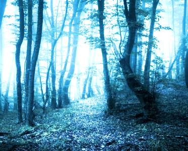 gc14-ghostwood-edge
